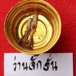 Paya Wan Jakkajan Cordyceps Cicada for Healing and Maha Lap Lucky Fortunes Magical Properties
